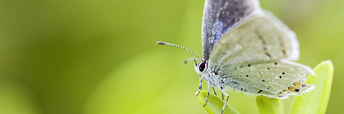 butterfly-5131967